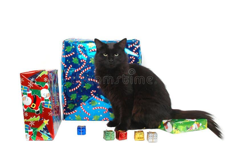 Weihnachtskatze 10 lizenzfreies stockfoto