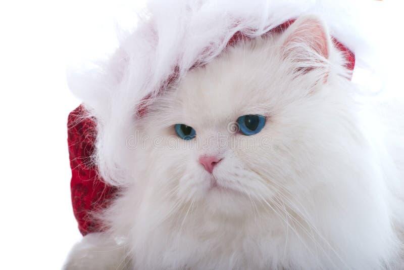 Weihnachtskatze stockfoto