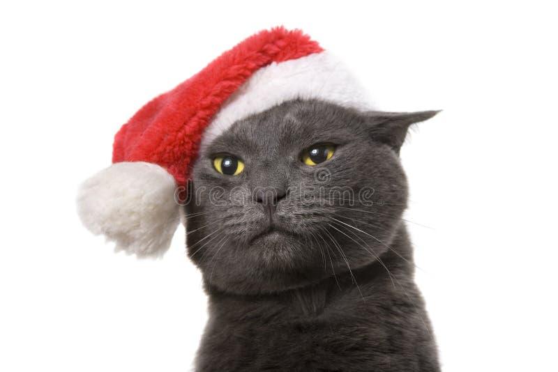 Weihnachtskatze - Gray Cat Santa, lokalisiert auf weißem Hintergrund stockfoto