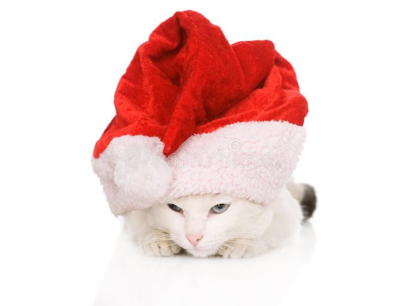 Weihnachtskatze in roter Santa Claus-Kappe lokalisiert auf einem weißen backgro stockfotografie