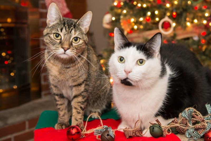 Weihnachtskatzen lizenzfreie stockbilder