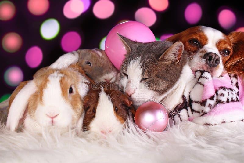 Weihnachtskatzenhundekaninchenschwein Cavy-Tiergruppentiere, die zusammen stillstehender Weihnachtssich tag lieben lizenzfreie stockfotografie