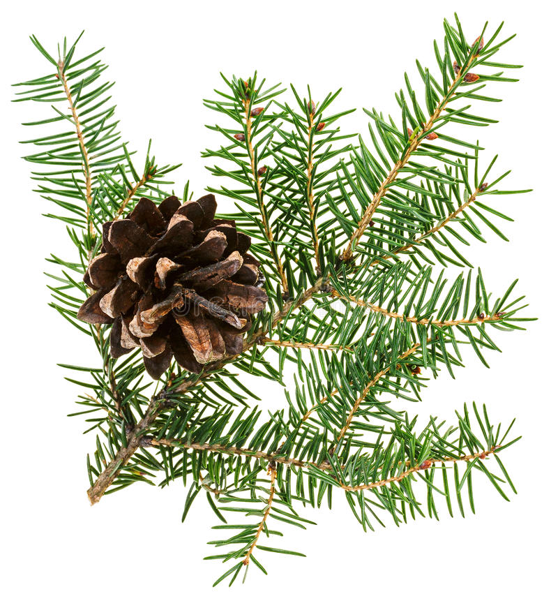 Download Weihnachtskegel Mit Tannenzweig Stockfoto - Bild von feiertag, tanne: 27730234