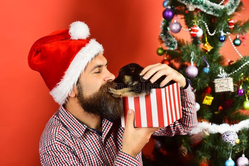 Weihnachtskonzept Doggy treibt den Weihnachtsmann weg lizenzfreies stockbild
