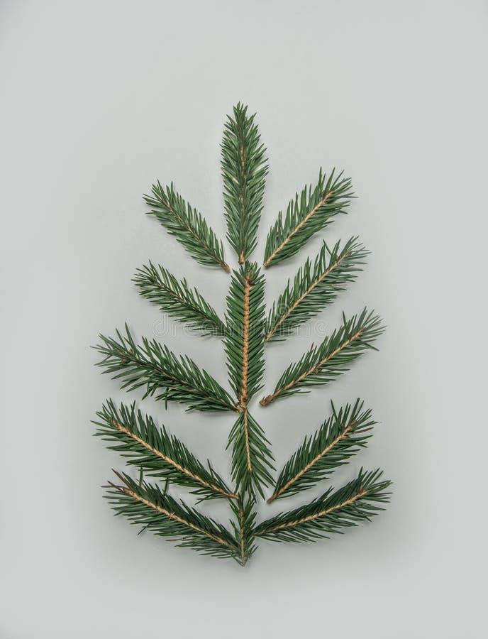 Weihnachtskonzept, Weihnachtsbaumzweige ausgebreitet wie ein Baum lizenzfreies stockbild