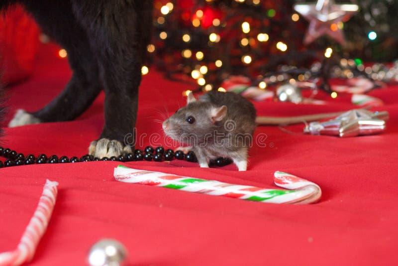 Weihnachtsmäuse- und -hundekonzept, Tiere, neues Jahr stockfoto