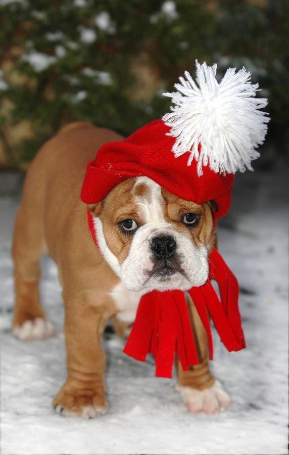 Weihnachtsmann-Bulldogge stockfoto