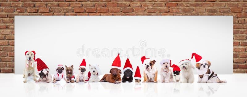 Weihnachtsmann-Hunde vor einer großen leeren Anschlagtafel stockfotografie