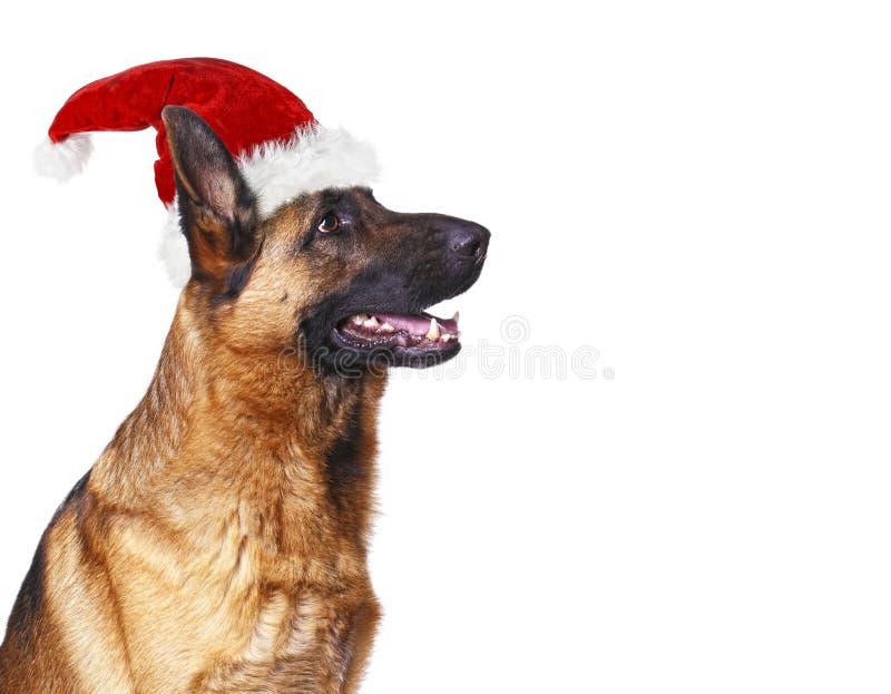 Weihnachtsmann-Hundehintergrund lizenzfreie stockfotografie