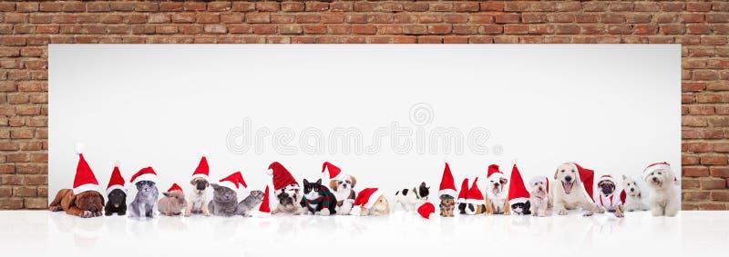 Weihnachtsmann-Tiere nähern sich großer leerer Anschlagtafel stockfotografie