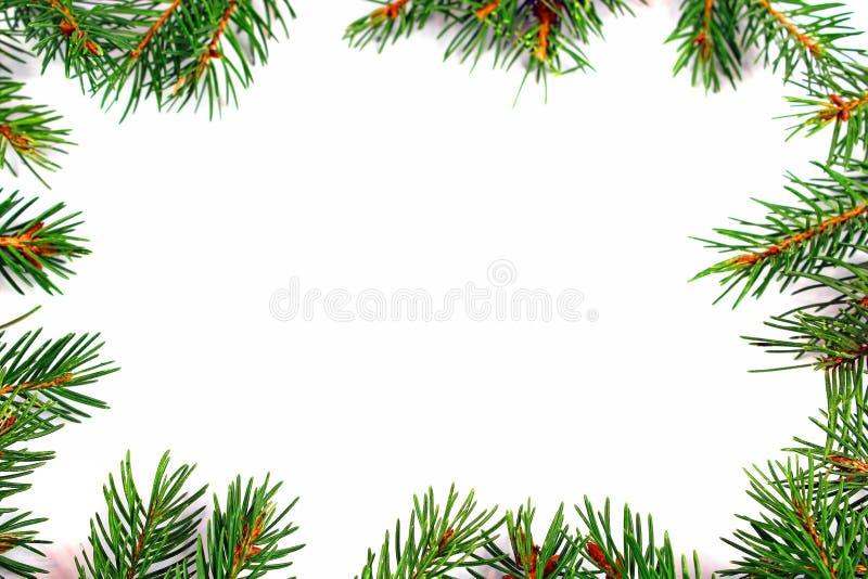 Weihnachtsrahmen mit natürlichem Tannen-Baumast lizenzfreie stockfotos