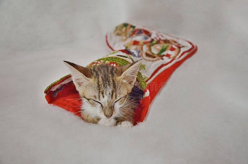 Weihnachtsschlafenmiezekatze lizenzfreies stockfoto
