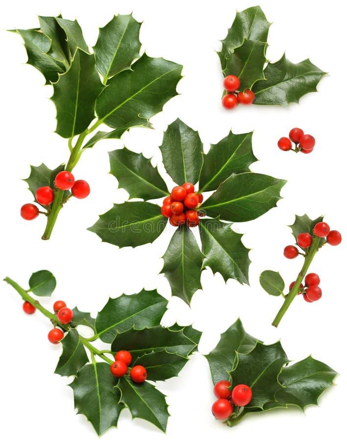 Weihnachtsstechpalme - grünes Blatt, rote Beere, Zweig lizenzfreie stockfotos