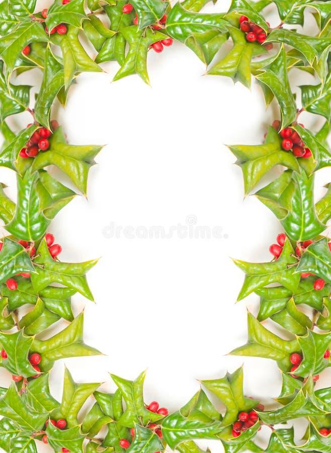 Weihnachtsstechpalmefeld getrennt stockfoto