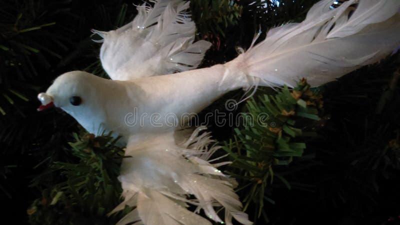 Weihnachtsstimmung der Taube lizenzfreie stockbilder