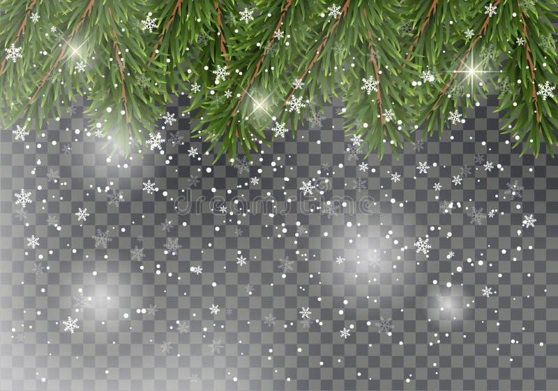 Weihnachtstannenbaumaste auf transparentem Hintergrund mit fallendem Schnee Entwurf des neuen Jahres für Karten, Fahnen, Flieger lizenzfreie abbildung