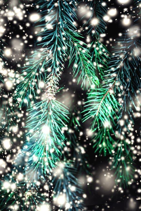 Weihnachtstannenbaumaste mit fallendem Schnee Frohe Weihnachten B stockfoto