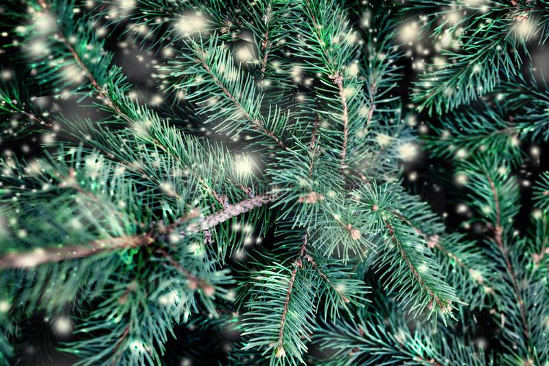Weihnachtstannenbaumaste mit fallendem Schnee Frohe Weihnachten B lizenzfreies stockbild