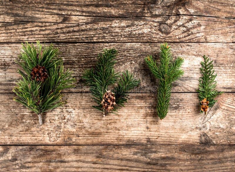 Weihnachtstannenzweig, Fichte, Wacholderbusch, Tanne, Lärche, Kiefernkegel auf hölzernem Hintergrund lizenzfreies stockbild
