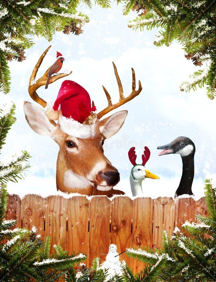 Weihnachtstiere lizenzfreie stockfotografie