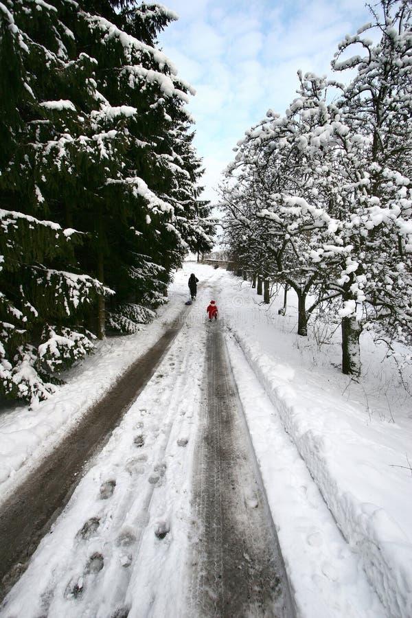 Weihnachtswald lizenzfreies stockbild