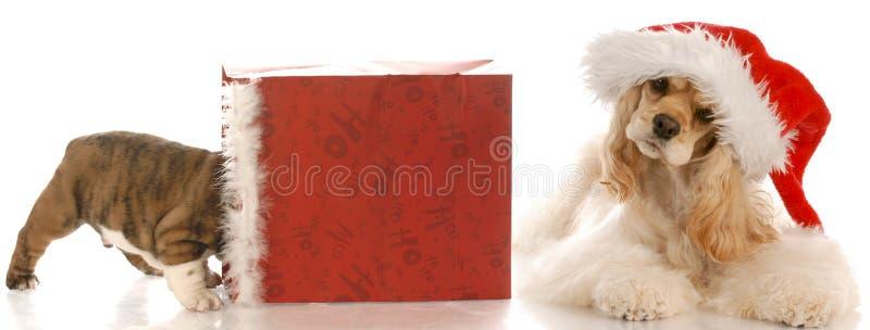 Download Weihnachtswelpe stockbild. Bild von gesicht, getrennt - 12203173