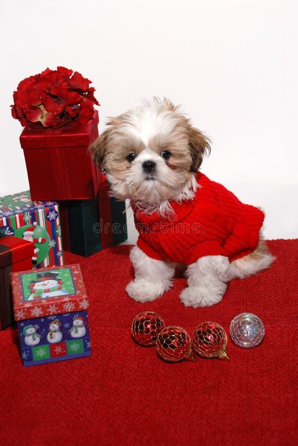 Weihnachtswelpe lizenzfreie stockbilder