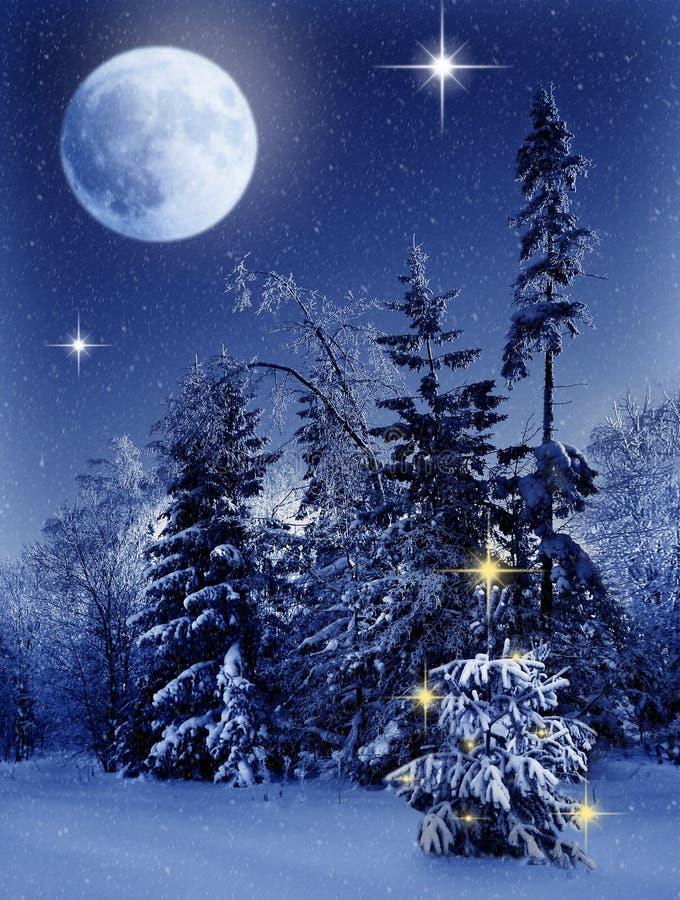 Weihnachtswinterwald zur Nacht stockfotografie