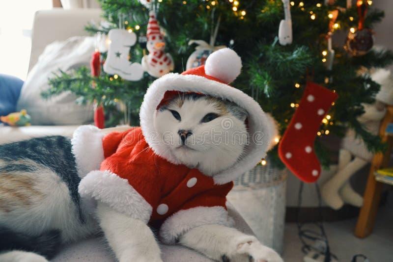Weihnachtszeit! lizenzfreie stockfotografie
