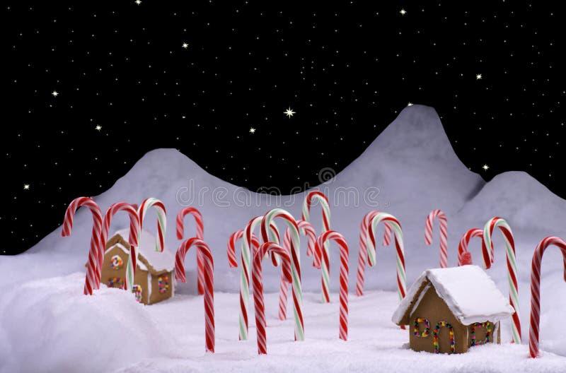 Weihnachtszuckerstange-Wald mit sternenklarem Himmel stockfoto
