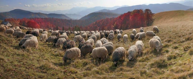 Weilanden over de Karpaten in de herfst royalty-vrije stock foto