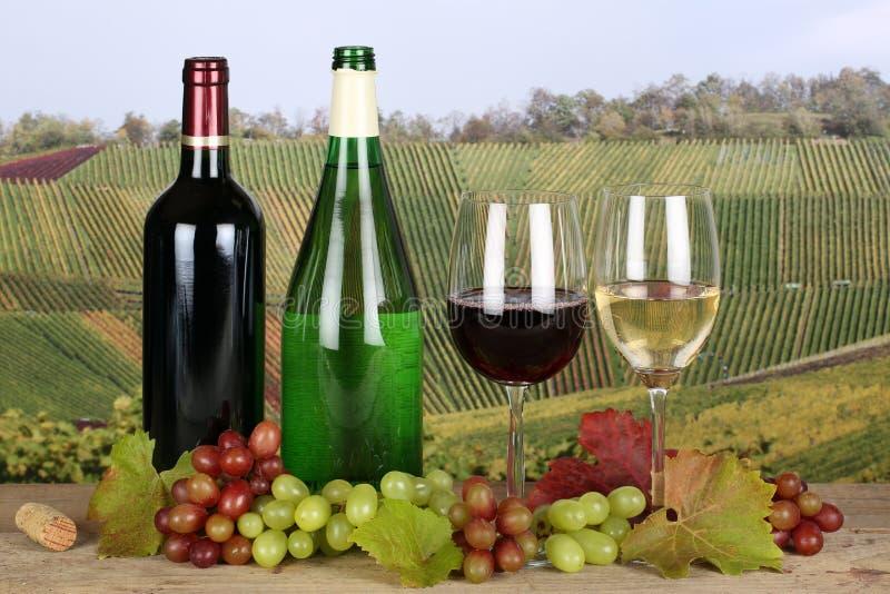 Wein in den Flaschen in den Weinbergen stockbilder