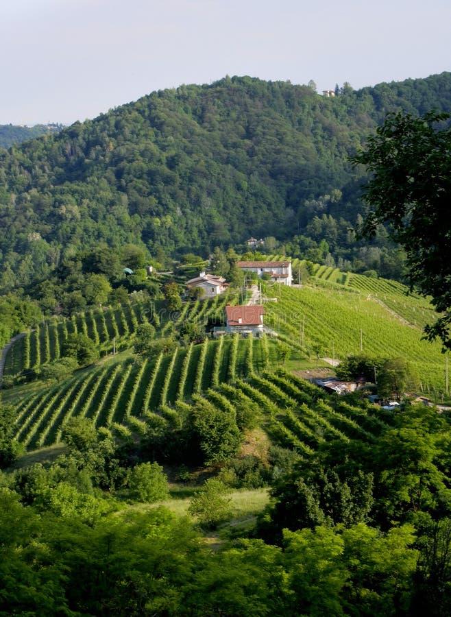 Wein ist ein Meister in Italien stockbilder