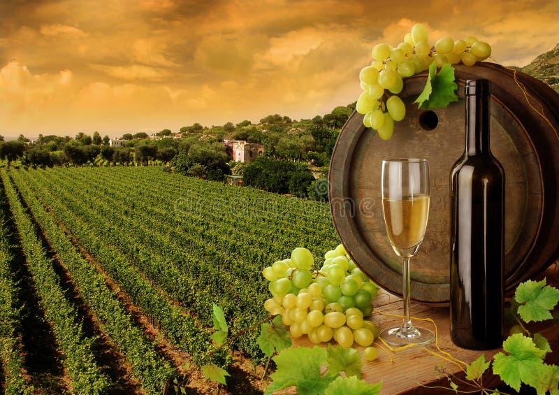 Wein und Weinberg im Sonnenuntergang stockbild