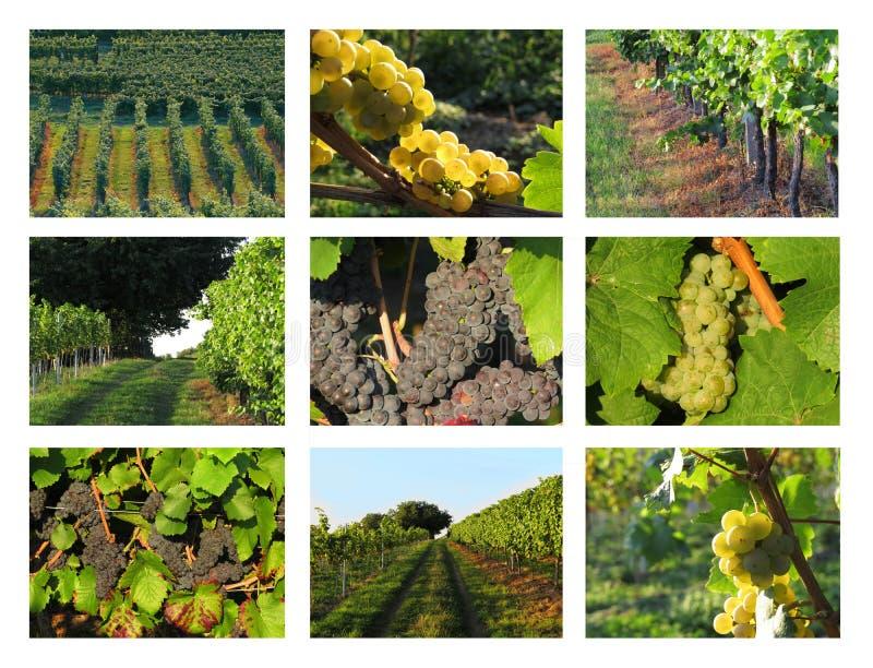 Weinanbau-/Weincollage lizenzfreie stockfotos