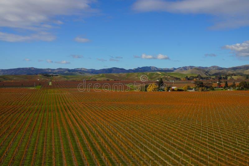 Weinanbaubereich im Marlborough-Bezirk von Neuseeland stockfotografie