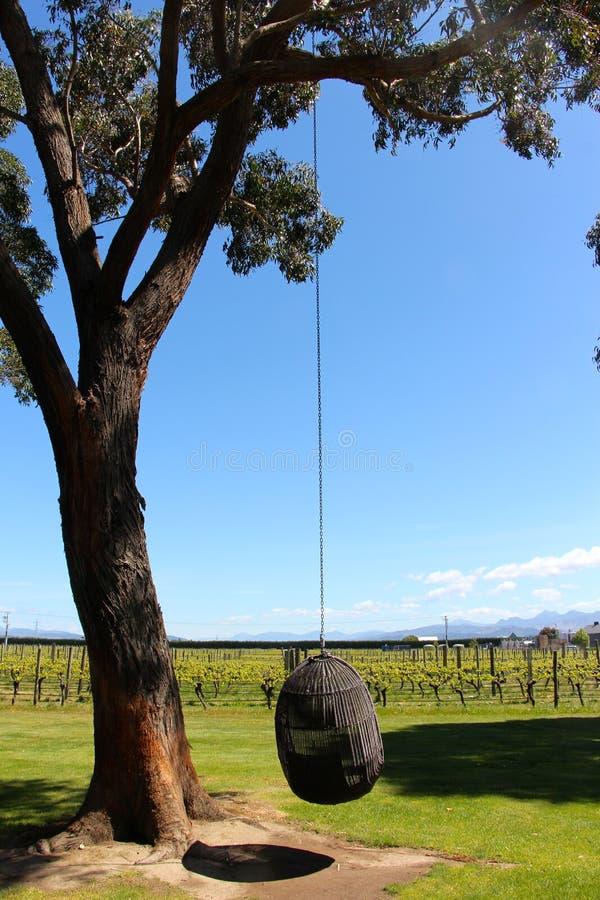 Weinanbaugebietnelson-Weinberg Neuseeland lizenzfreies stockbild