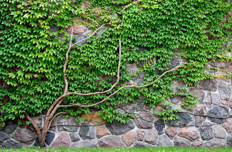 Weinbau auf einer Felsenwand stockfoto