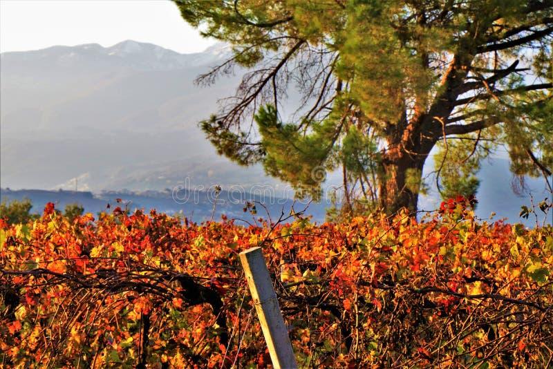 Weinberg bebautes Feld in einer Landschaft lizenzfreies stockfoto