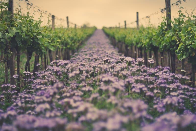 Weinberg-Blumen stockbilder