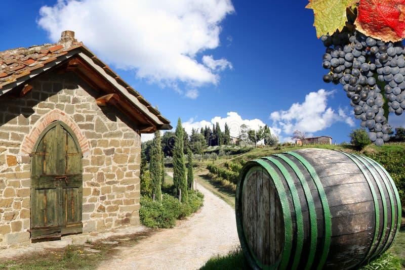 Weinberg in Chianti, Italien lizenzfreies stockbild