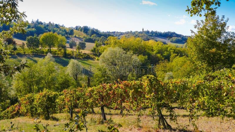 Weinberg in den Hügeln an einem sonnigen Tag lizenzfreies stockfoto