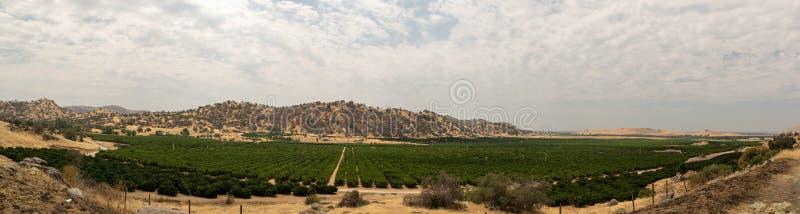 Weinberg in einem trockenen Kalifornien-Tal stockfoto