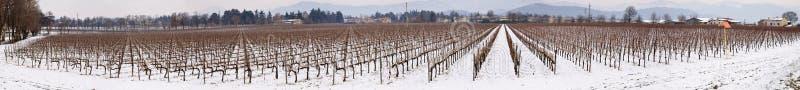 Weinberg in Franciacorta im Winter mit Schnee lizenzfreies stockfoto