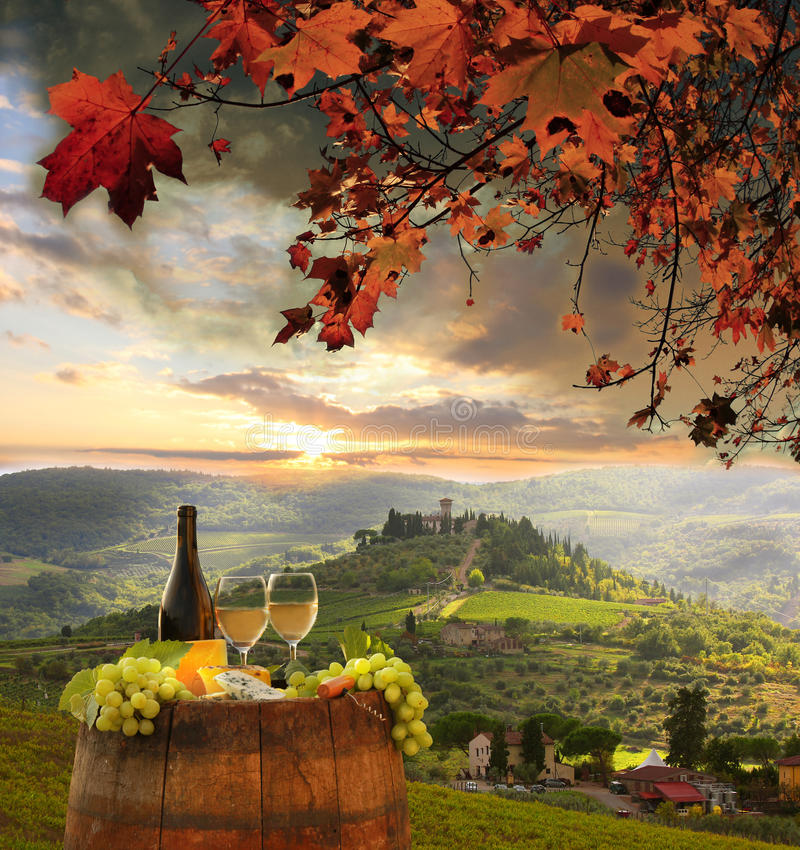 Weinberg im Chianti, Toskana stockbild