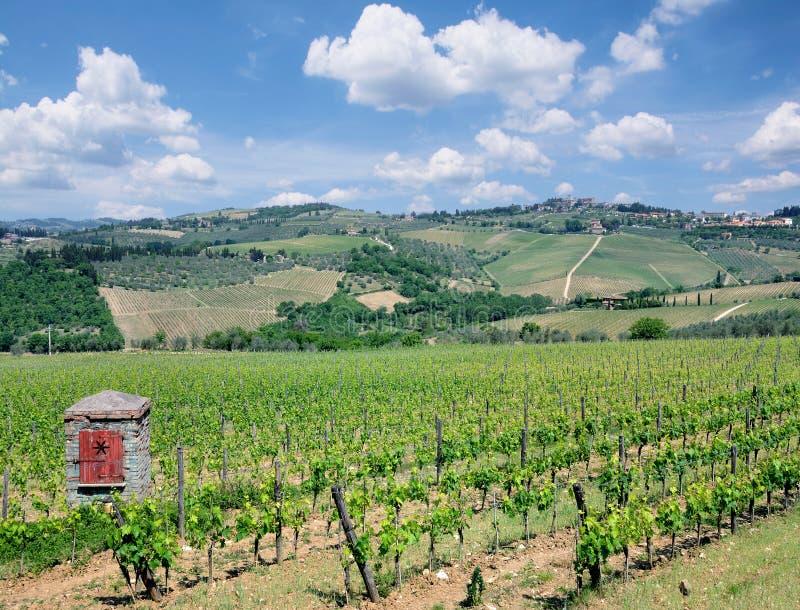 Weinberg-Landschaft, Chiantiregion, Toskana, Italien stockbild