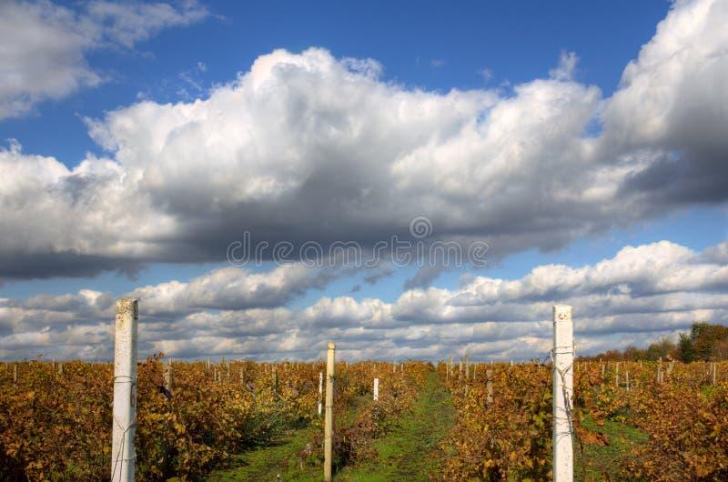 Weinberg-Landschaft im Herbst lizenzfreie stockfotografie