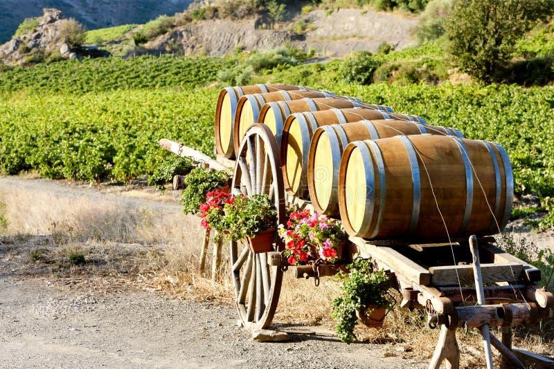 Weinberg mit Fässern, Frankreich lizenzfreies stockbild