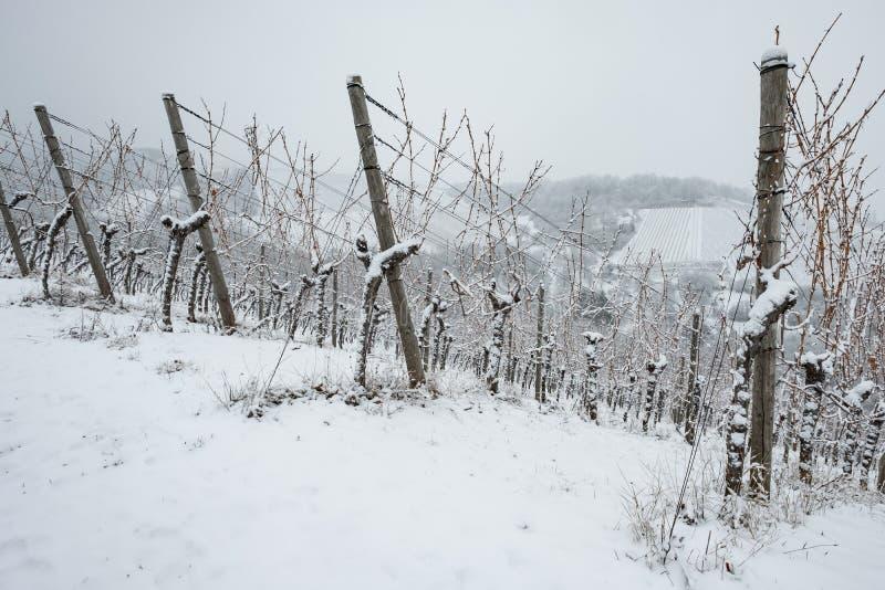 Download Weinberg Mit Reben Im Winter Mit Schnee Stockfoto - Bild von winter, holz: 90236374