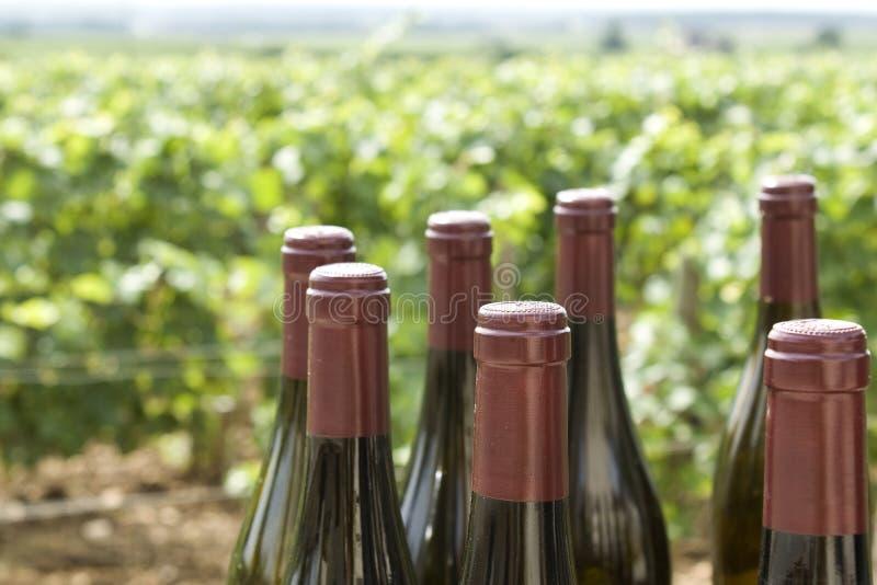 Weinberg mit Weinflaschen stockbild